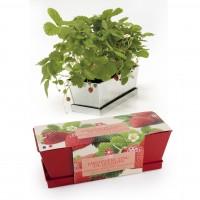 radis et capucine fraisier en jardinière