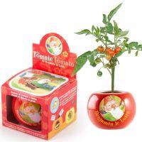 radis et capucine graines de tomate cerise